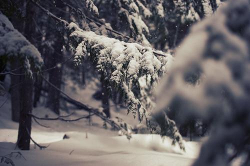 Autors: Jangbi December #5 :)