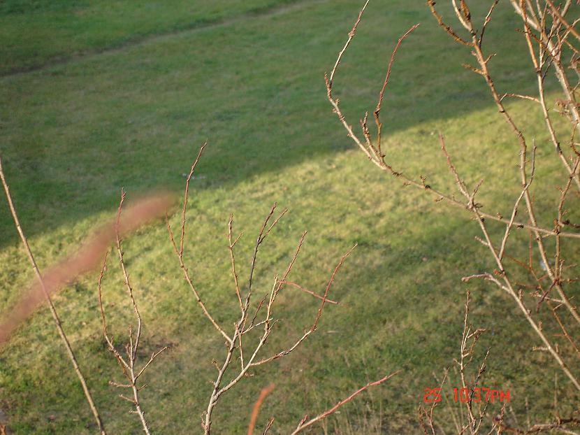 Autors: Hamster2001 `Zaļie` svētki