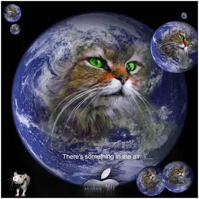 Sarežģītās situācijās kad... Autors: Raziels Par ko kaķi zina, bet nerunā