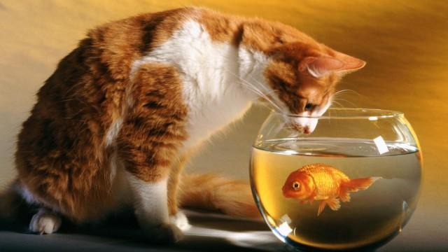 Nevar izslēgt hipotēzika... Autors: Raziels Par ko kaķi zina, bet nerunā