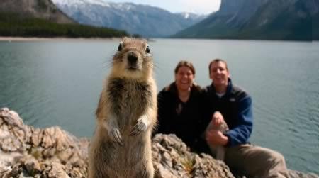 Vāvere nejauscaroni uzzināja... Autors: Raacens Labākās dzīvnieku fotobombas!
