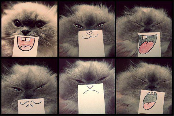 Autors: Anastasija Smile Random bildites:)