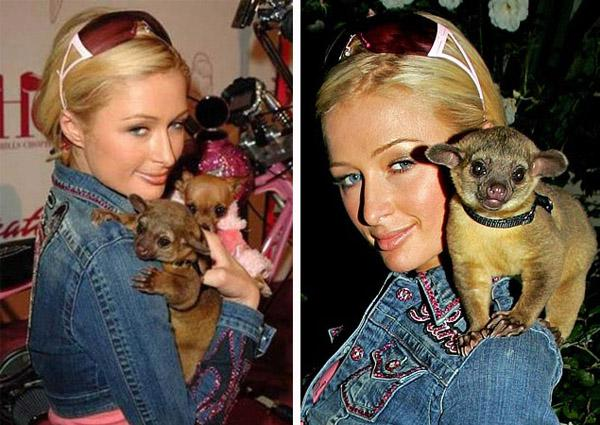 Paris Hilton ar Kinkajou 2005... Autors: GanjaGod Slavenības ar saviem eksotiskajiem dzīvniekiem