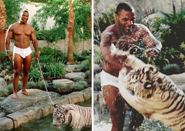 Mike Tysons ar savu mīluli... Autors: GanjaGod Slavenības ar saviem eksotiskajiem dzīvniekiem