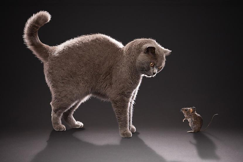 9 bdquoEs esmu drauds putnu... Autors: kasītis no simpsoniem D Lietas, ko kaķi par sevi tev neatklās