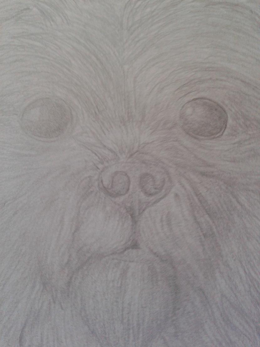 dzīvnieki Autors: igonuts mani zīmējumi.