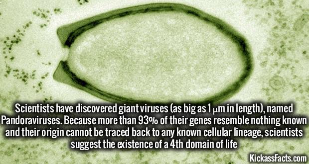 Zinātnieki ir atklājuscaroni... Autors: Šimpandze88 Daži interesanti fakti.