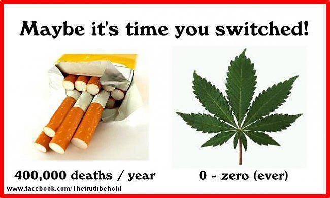 Lielākā daļa tabakas smēķētāju... Autors: BARAKA OBAMAKA Fakti par marihuānas lietošanu, 100% Patiesi
