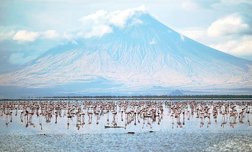 Flamingo atpūscaronas Autors: BodyBoard Attēli / Teksti - Dabas Pasaule