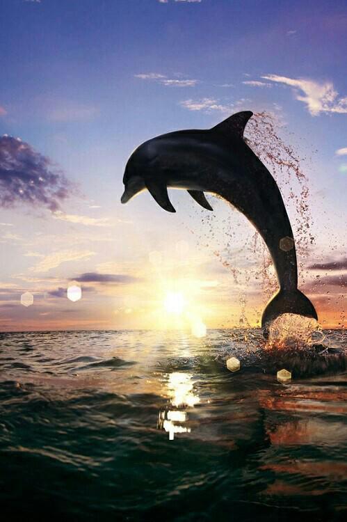 5 Delfīnu saruna nav tikai... Autors: kitucis123 Delfīni #Fakti . ♥