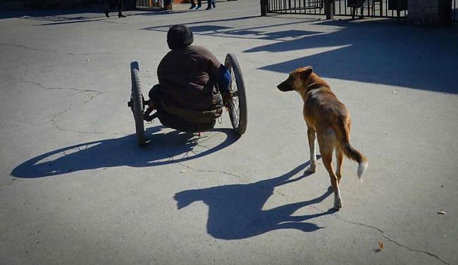 Manao un viņa suns Lielā... Autors: kaķūns Lielā Dzeltenā - suns ar lielu sirdi