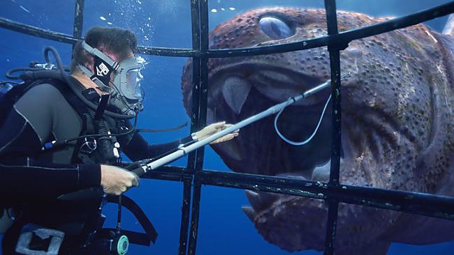 Scaronī zivs dzīvoja 20... Autors: Gmonster Dunkleostus