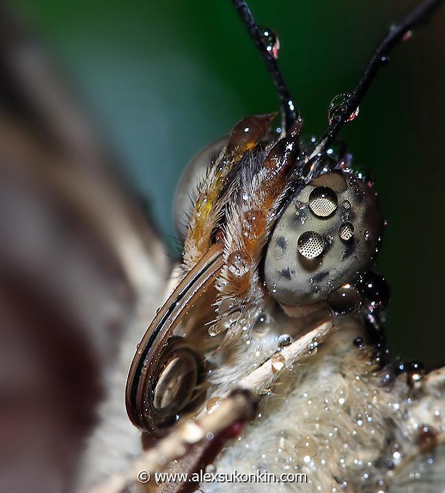 Tauriņa acs Autors: Tourist Unikālās acis