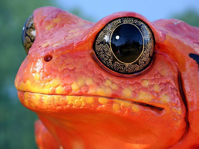 Vardes acs Autors: Tourist Unikālās acis