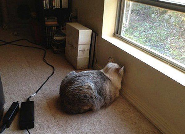 Autors: mousetrap Vajag pievērst uzmanību, ja tavs mīlulis tā dara!
