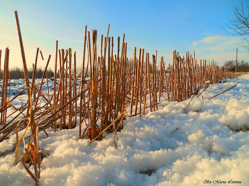pamests pusdarbā Autors: saule70 skaidrā ziemas dienā :)