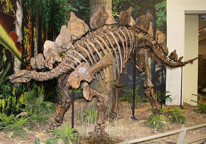 Kolorādo ir dota iesauka... Autors: Kapteinis Cerība Fakti par Dinozauriem 1. daļa.