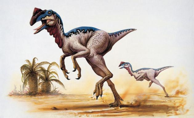 Zinātnieki uzskata ka daži... Autors: Kapteinis Cerība Fakti par Dinozauriem 2. daļa.