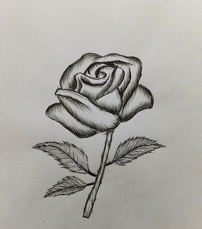 Autors: Edgarsnr1 Kā uzzīmēt Rozi Soli pa Solim