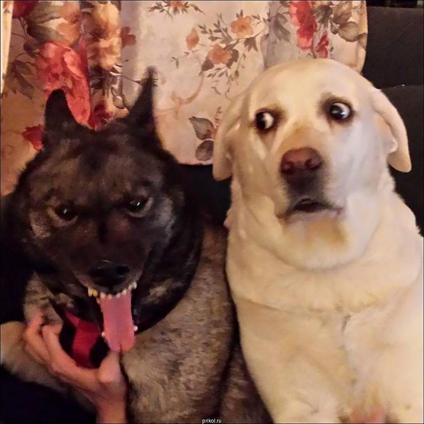 Autors: Kolch Man nav ne jausmas kas ar to suni...