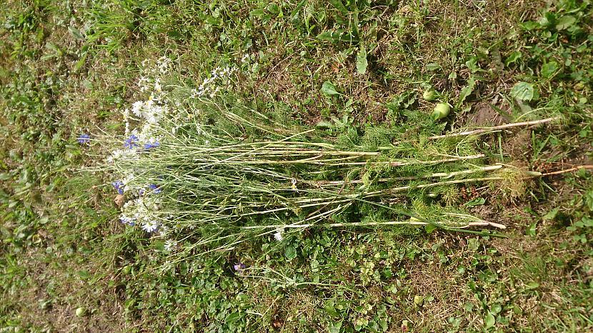 Tā kā pāri palika daudz ziedu... Autors: annalinda Mans veikums