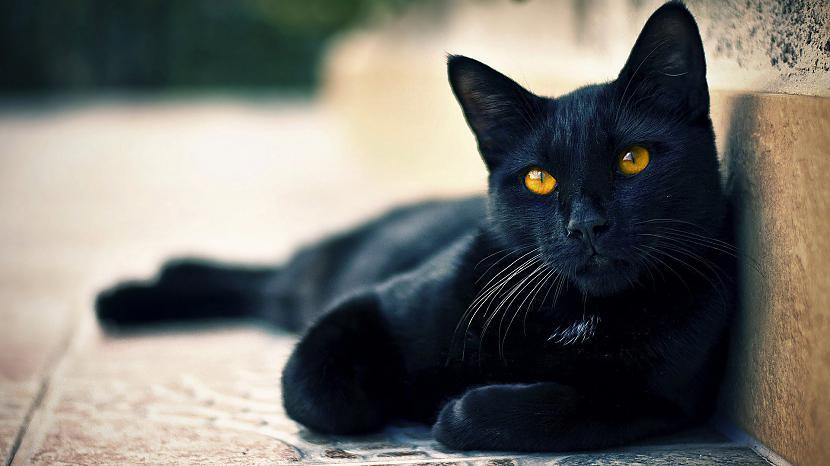 miersTikai titulbilža Autors: Hello Un atkal kaķis !