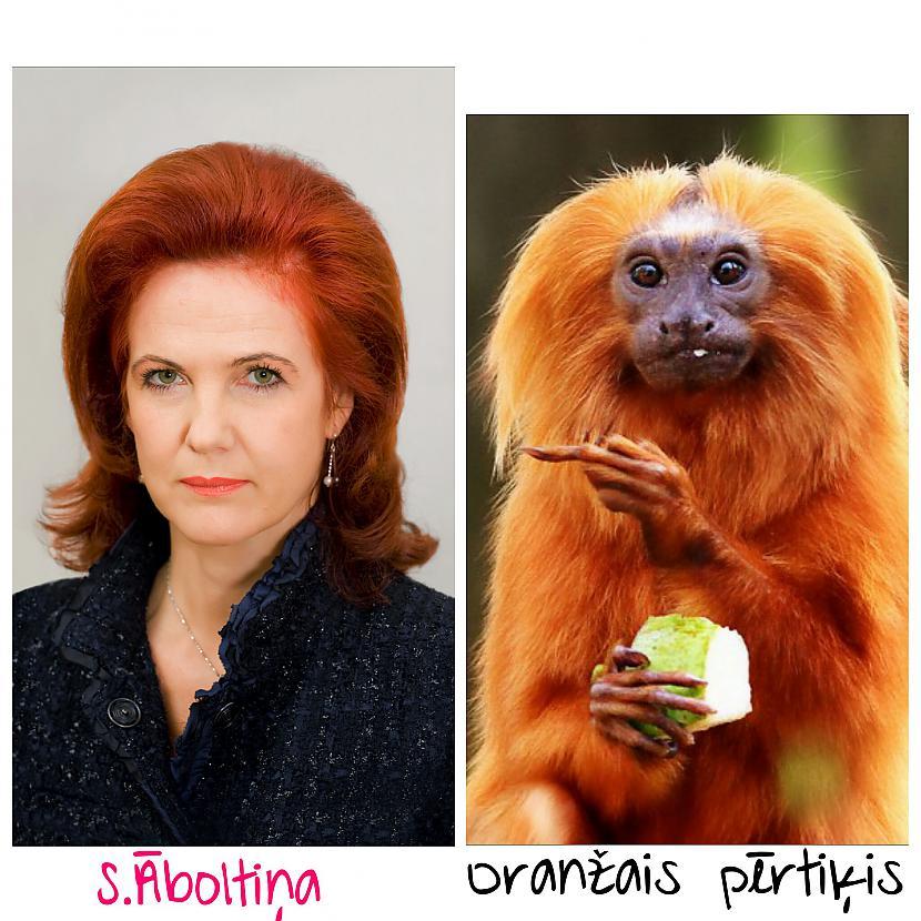 SĀboltiņa  partijas Vienotības... Autors: ghost07 Latvijas politiķi vs pērtiķi (Līdzības)