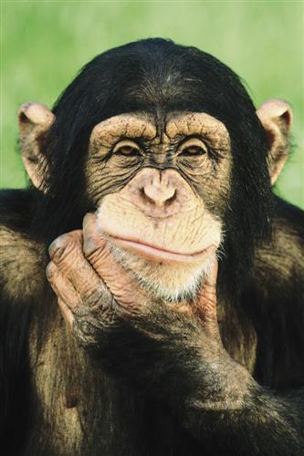 Scaronimpanzes ir vienīgais... Autors: paulabogdanovica Interesanti fakti