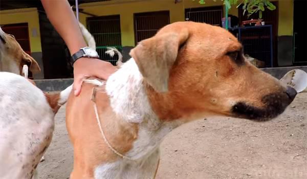 Un lūk rezulāts pēc 6 nedēļām Autors: 3L3KTR1C0 Neticams stāsts par klaiņojošo suni, kuram bija briesmīga nieze
