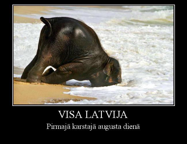 Autors: Freesia Visa Latvija