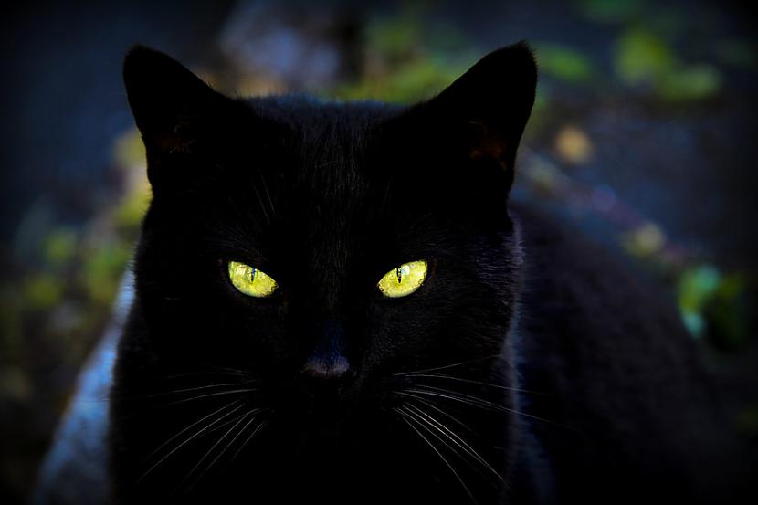 Autors: Past Echo kaķi