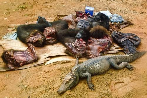 Savvaļas dzīvnieku gaļaEs ņemu... Autors: Alevender Dīvainākie ēdieni dažādās pasaules malās!
