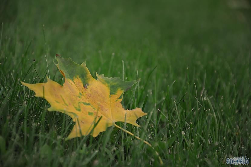 Autors: Onyxn Nāk rudens