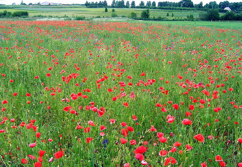 Mums ir klajie pļavas lauki Autors: MJ Lover Kāpēc, Latvija ir pati labākā?