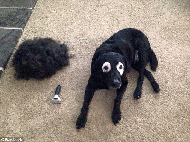 Lūk scaronādi Roudijs... Autors: zeminem Pandusuns: suns ar retu ādas slimību, kas liek līdzināties pandai.