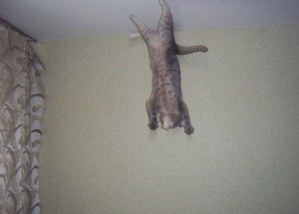 Autors: matilde Kaķi, kuri aizmirsa par gravitāciju!