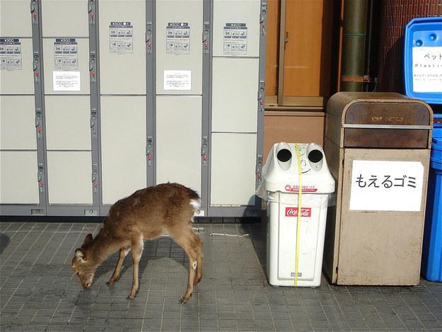 Katrā stacijā atrodas dažādu... Autors: matilde 17 lietas, kas ir Japānā, bet nav nekur citur pasaulē!