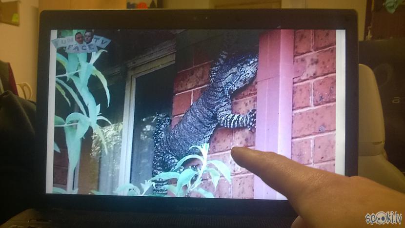 Autors: zeminem2 Saimnieks uz savas mājas atrod milzīgu reptili!