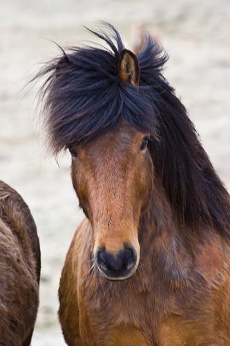 Autors: Gufija Cutey and beauty animals