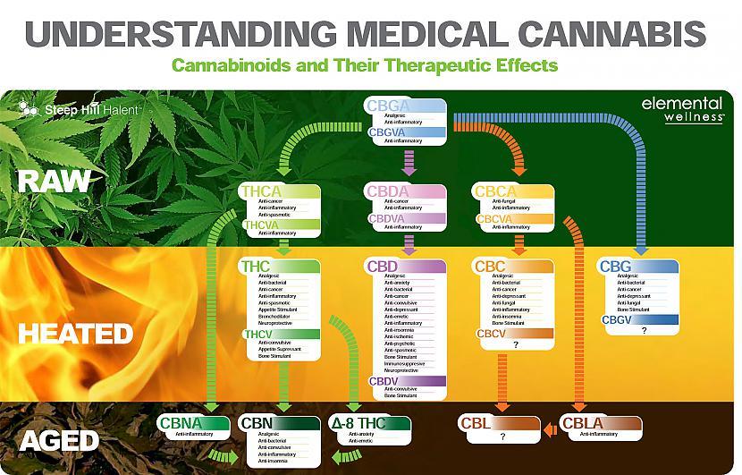 THCa un CBDaUz nobeiguma nots... Autors: PkerLv Top 10 kanabinoīdi