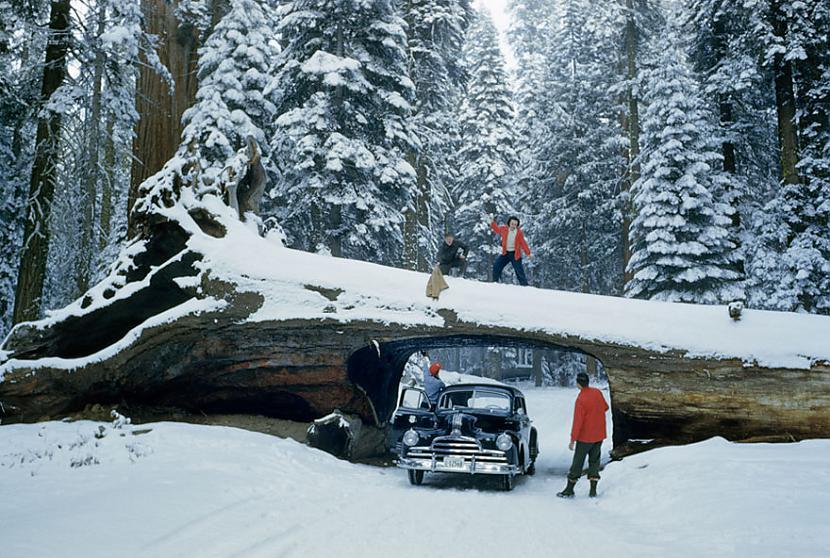 Milzīgs koka stumbrs kurā... Autors: me guusta 16 agrāk nepublicēti foto no National Geographic arhīviem,kas aizraus elpu!