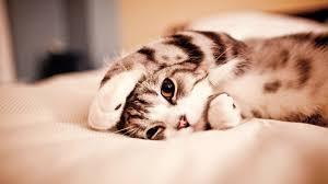 Autors: PIKACHUXD Pamodos...video labākam rītam...ja tu mīli kaķus