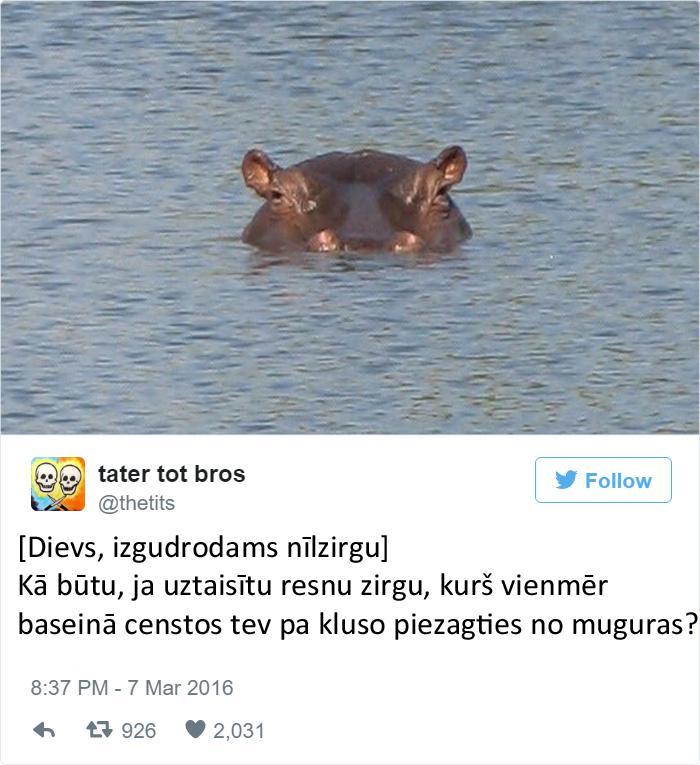 Autors: matilde 20 smieklīgi tvīti par to, kā Dievs izgudroja dzīvniekus