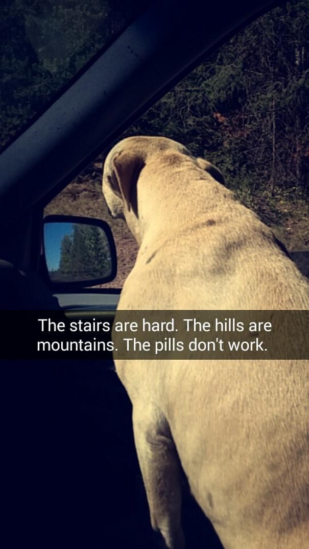 Kāpnes ir apgrūtinājums... Autors: matilde Šī sieviete iemūžināja sava mirstošā suņa pēdējo dienu