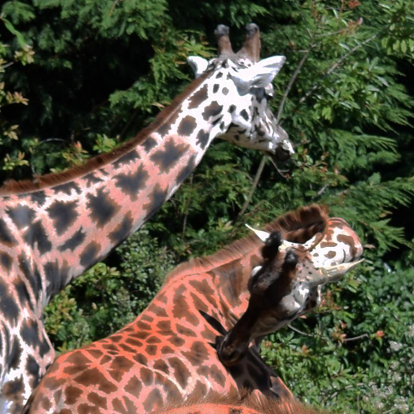 Autors: Strāvonis Kā es šodien mācījos zīmēt žirafi