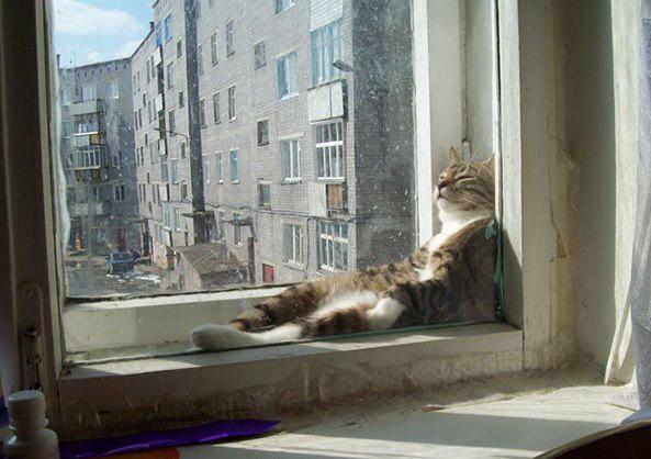 nbspNekas ka scaronauri... Autors: Ciema Sensejs 20+ kadri, kuri pierāda, ka kaķi var gulēt pilnīgi visur