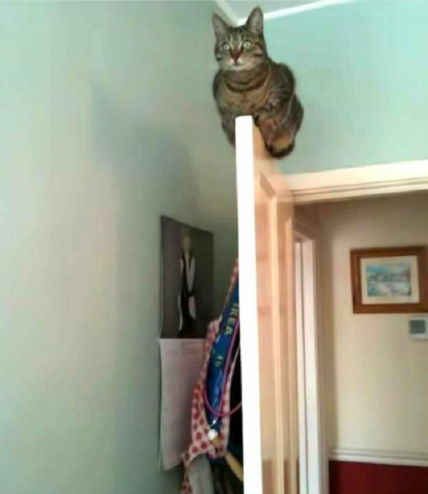 Autors: LordsX Un es divas nolādētas stundas meklēju to stulbo kaķi...