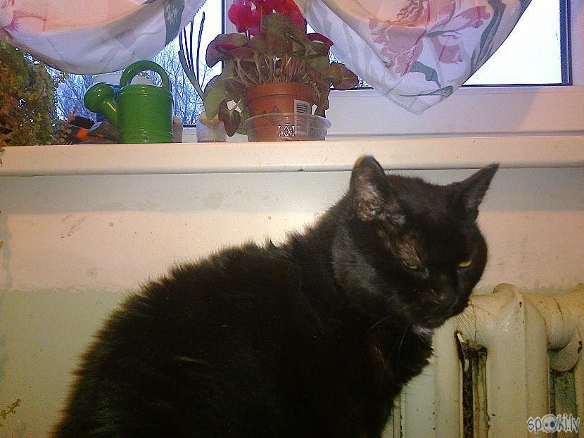 Deine sazvērnieciski piemiedza... Autors: ezkins Delikāta diskusija par kaķu WC
