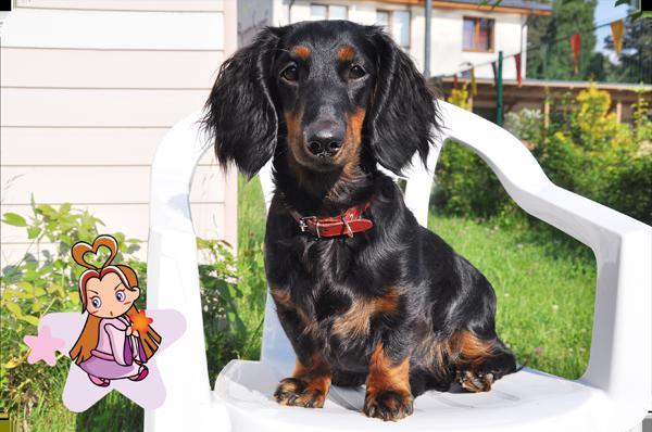 Jaunavas zīmē dzimis suns ir... Autors: Fosilija Kas dzimis jaunavas zodiaka  zīmē?