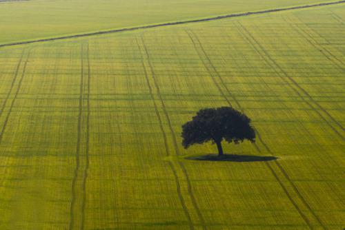 3 OzolsOzols ir varens koks ne... Autors: Vinnīts Koki!